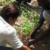 CDB Seedling Distribution and Education 2